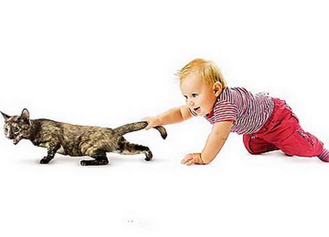 Ребенок тянет за хвост кошку